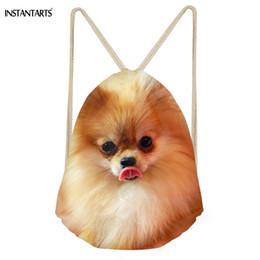 Pomeranian Dogs Online Shopping Pomeranian Dogs For Sale