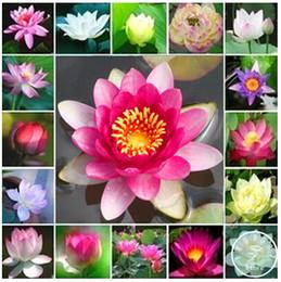$enCountryForm.capitalKeyWord Australia - Promotion ! 10 Pcs Cheap Water Lily Seeds Colorful Bonsai Balcony Flower Bowl Lotus Perennial Aquatic Plant Potted Home Bonsai