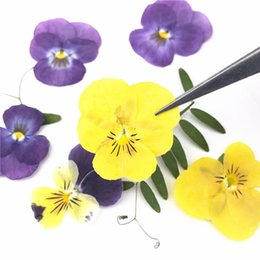 $enCountryForm.capitalKeyWord Canada - 2019 Pansy Natural Plant Press Flower Shiny Yellow Color Kids Class Specimen For DIY Epoxy Material And Painting Art Crafts Wholesale 120Pcs