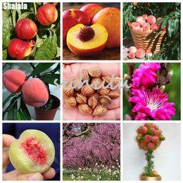 Peaches seeds online shopping - Sale Sweet Peach Seeds Outerdoor Peach Tree Seeds Dwarf Bonanza Peaches Bonsai Sweet Fruit Seeds For Home Garden Plants