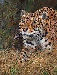 $enCountryForm.capitalKeyWord Australia - Artwork -american-jaguar-big-cat- Unframed Modern Canvas Wall Art for Home and Office Decoration,Oil Painting ,Animal painatings ,frame.