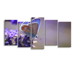 Art Canvas Prints NZ - 5 pieces high-definition print butterfly canvas painting poster and wall art living room picture B-088