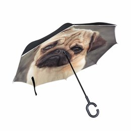 6803b4f0152f Shop Umbrellas For Dogs UK | Umbrellas For Dogs free delivery to UK ...