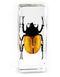 resin mice UK - 5 Horned Rhino Beetle Specimen Resin Embedded Real Beetle Learning&Education Paperweight Transparent Mouse Toys Kids Science&Discovery Gifts
