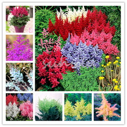White perennial flowers nz buy new white perennial flowers online mixed 9 colors astilbe chinensis seeds 100 pcs bonsai purple red white blue pink green colorful perennial garden flowers mightylinksfo