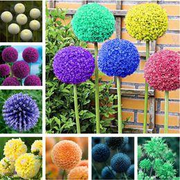 Discount rare beautiful flowers - Free Shipping 100 Pcs Rare Color Giant Allium Giganteum Beautiful Flower Seeds Garden Plant The Budding Rate 95% Rare Fl
