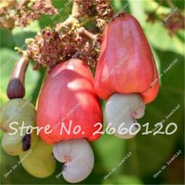 Discount apple seeds - Sale!!! 5 Pcs Edible Cashew Apple Seeds Delicious Fruit Seeds Pot Plant DIY Home Garden Free Shipping Rare Tropical Cash