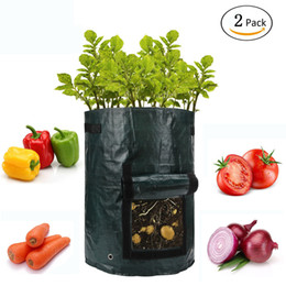 Garten Gemüsepflanzen Online Großhandel Vertriebspartner