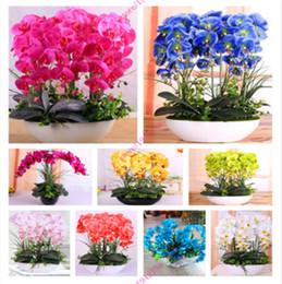 Orchidées D\'intérieur Distributeurs en gros en ligne, Orchidées D ...