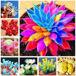 2018 New 100 pcs Decoração Do Jardim Sementes De Lithops Viver Pedra Sementes De Flores Raras Sementes Suculentas Para Casa Jardim planta