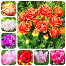 93cc17e9dc35 Double Tulip Seeds Rare Flowers Seeds Perennial Bonsai Plant Gift For Home  Garden Courtyard Beautify Easy To Grow 100 Pcs Free Shipping