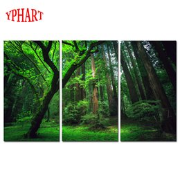 Picture Canvas Prints NZ - 3 Panels Green Forest HD Canvas Print Painting Artwork Modern Home Wall Decor Painting Canvas Art HD Picture On Prints
