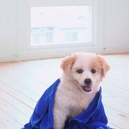$enCountryForm.capitalKeyWord Canada - Pet Supplies Microfiber Dog Towel Drying Towels Fashion Pet Bath Towels Hypoallergenic Chemical Free Cleaning Cloth