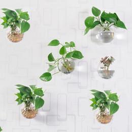 Wholesale Terrarium Plants Australia New Featured Wholesale