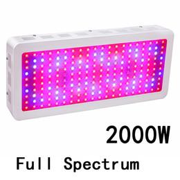 Ingrosso Full Spectrum 2000W Doppio chip LED Grow Lights Rosso blu UV IR per impianti interni e fiori di alta qualità