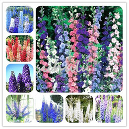 Wholesale Flower Seeds Delphinium Seeds Mix Delphinium Cultorum Family Garden Plant Seeds Bee and Butterfly Beauty Your Garden Free Ship
