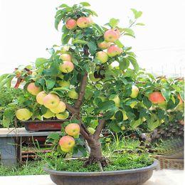$enCountryForm.capitalKeyWord UK - 30pcs bags apple tree seeds Dwarf bonsai apple tree MINI fruit seeds for home garden planting Fruit seed