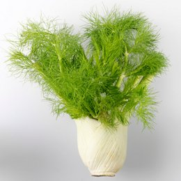 Wholesale Herb Seeds UK - Fennel seeds, green vegetable herb seeds for home garden plant seed 100 particles bag