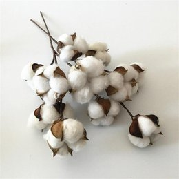 Wholesale cotton branches online shopping - Fashion White Artificial Ornamental Flowers Iron Rod Natural Cottons Head Photography Props Dry Cotton Branch Bundles High Quality tz aa