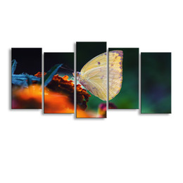Canvas Prints Australia - 5 pieces high-definition print butterfly canvas painting poster and wall art living room picture B-079
