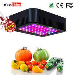 Discount blooming lamp - Double chips 300W led grow lights 16 kinds spectrum Flower indoor Lamp for plants Overseas warehours Fast deliver Veg Bl