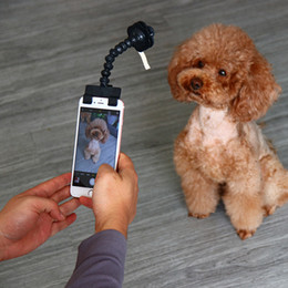 stick toy for cats 2020 - Portable Pet Selfie Stick for Pets Dog Cat Take Capture Photos Training Toy pet supplies clip phone Attachment fit iPhon