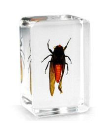 acrylic blocks NZ - Acrylic Resin Embedded Red Cicada Teaching Specimen Transparent Mouse Paperweight Block Type Kids Science Learning&Discovery Education Kits