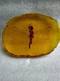 China Pole Australia - A collection of ancient China.Amber dragonflies>>>Free shipping