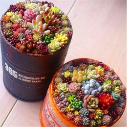 Nouveau 200 pcs mix lithops graines rares graines succulentes Ass graines de fleurs Pseudotruncatella Living Stone bonsaï pot mini plante de jardin