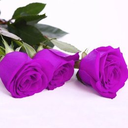 Roses calla lily online shopping - Cheap Purple Rose Seeds Attract Color Pink Piece Seeds Per Package Home Garden Seeds