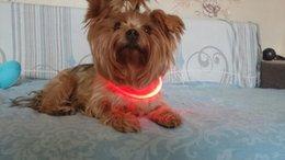 Venta al por mayor de Envío gratis carga USB ajustable para mascotas collar de perro LED recargable noche intermitente luminoso collares de perro de plástico sólido cuello collar para perros