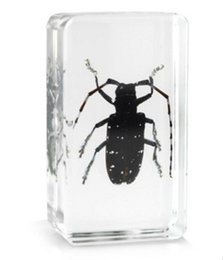 mouse blocks Australia - Spotted Longhorn Beetle Specimen Resin Embedded Beetle Paperweight Toys&Gifts Transparent Mouse Block New Baby Biology Science Teaching Kits