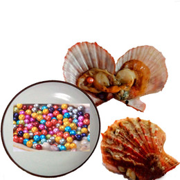 $enCountryForm.capitalKeyWord Australia - Free shipping!30PCS of Mix 25 Colors Single Individual Vacuum Package 6-7mm Saltwater Red shell Round Akoya Pearl Oyster wholesale