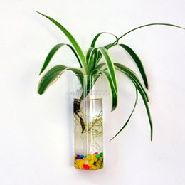 Terrarium Wall Plants Nz Buy New Terrarium Wall Plants Online From