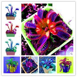 $enCountryForm.capitalKeyWord Australia - 100 Pcs Garden Potted Green Plant Flytrap Seeds Bonsai Dionaea Muscipula Giant Clip Venus Flytrap Plant Seeds Carnivorous Plant