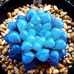 $enCountryForm.capitalKeyWord Australia - 50 Pcs Bag Yulu Succulent Seeds Mixed Beauty Lotus Lithops Pseudotruncatella Pot Flower Extremely Fleshy Indoor Bonsai Garden