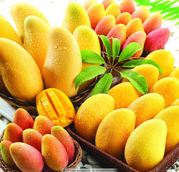 Mini tree pots online shopping - 2 bag mango seeds mini mango tree seeds bonsai tree seed Organic fruits and vegetables seeds pot for home garden planting