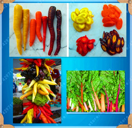 $enCountryForm.capitalKeyWord NZ - Rainbow Vegetable Seeds Tomato Carrot Chinese Cabbage Pepper 4 Kinds Of Rainbow Vegetable a Pack 100 Pcs