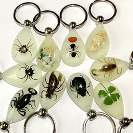 $enCountryForm.capitalKeyWord NZ - free shipping yqtdmy 20 pcs High Quality ice drop jewelry mix real scorpion&spider&crab&beetle keychain Wealth TAXIDERMY GIFT