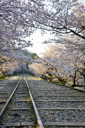 Spring Tracking Canada - Railway Track Photography Backdrops Printed Pink Cherry Blossom Trees Outdoor Spring Scenery Kids Children Studio Photo Shoot Backgrounds