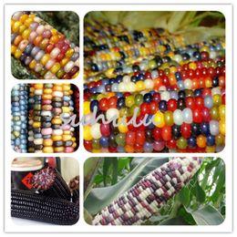 EdiblE gardEning online shopping - 30 Bag Super Sweet Fruit Corn Seeds Cultivation Sweet Waxy High Yielding Species Can Be Eaten Raw Rainbow Edible Corn Seeds Garden