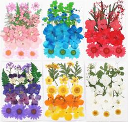 Wedding Display Cases Australia - Typr-2 1Set Mixed Dried Pressed Flower+ Leaves Plants Herbarium For Jewelry Postcard Photo Frame Phone Case Making DIY