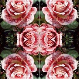 Perenne Rosa 100 pz Rosa Fiori Semi Pianta Spedizione Gratuita Home Giardino Piante Exotic Adenium Obesum Balcone Giardino Seed