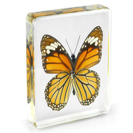 resin mice UK - Acrylic Resin Embedded Real Butterfly Specimen Paperweight Transparent Mouse Insect Learning&Education Toys Kids Biology Science Kits Gifts