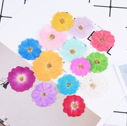 Wedding Display Cases Canada - 120pcs Pressed Dried Flower Chinese Rose Filler For Epoxy Resin Jewelry Making Postcard Frame Phone Case Craft DIY