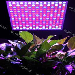 $enCountryForm.capitalKeyWord Australia - Full Spectrum 45W Led Grow Light Square Rice Shape Led Grow Tent Covered Green houses Lamp For Veg Flowering PC 110V 220V DHL