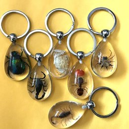 $enCountryForm.capitalKeyWord Australia - Free Shipping 16 Pcs New Real Drop Mix Ant Scorpion Spider Crab Beetle Insect Lucite Keychain Jewelry Yqtck001 T8190705