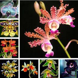 Toptan satış 100 adet / torba orkide tohumları, Phalaenopsis orkide çiçek tohumları ev bahçe için çok yıllık balkon bitki bonsai tohumları orkide tencere