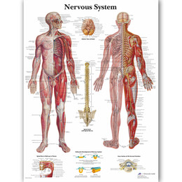 classroom decor NZ - Human Nervous System Chart Poster Map Canvas Painting Wall Pictures For Medical Education Doctors Office Classroom Home Decor J190707