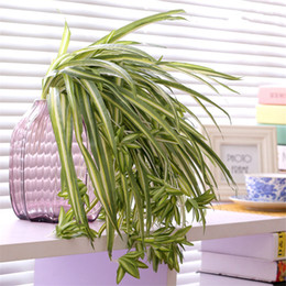 Fake Orchid Flowers Australia - fake flowers Artificial silk Chlorophytum Orchid leaves flores artificiales cheap wall fake Flowers grass plant home wedding decoration